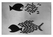 peces 15 M españa